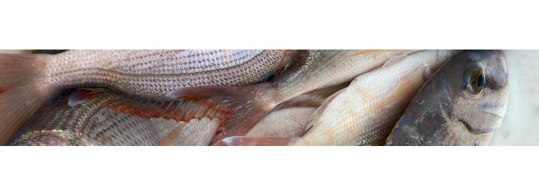 Angelzubehör zum Meeresfischen kaufen ➔ Fisherman´s Partner Onlineshop